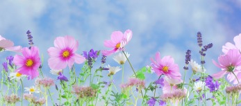 spring-flowers-wallpaper-7